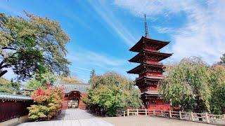 Live Japan Walk - Exploring Hirosaki