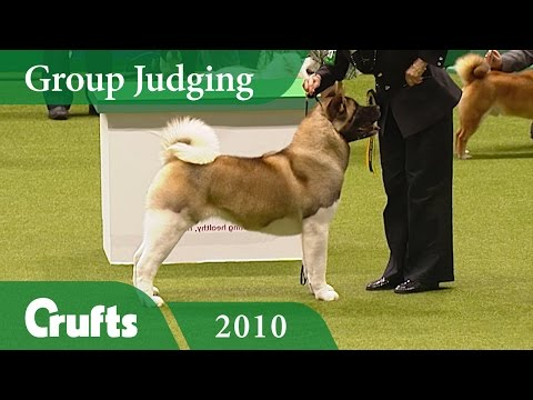 Akita Wins Utility Group Judging at Crufts 2010 | Crufts Cla