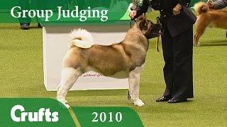 Akita Wins Utility Group Judging at Crufts 2010 | Crufts Dog Show