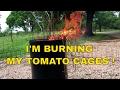 I'M BURNING MY TOMATO CAGES!
