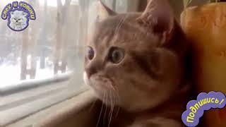 Кот Смотрит В Окно И Разговаривает