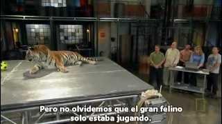 NatGeo La ciencia de la Lucha, Kung Fu el estilo del Tigre (subtitulos)