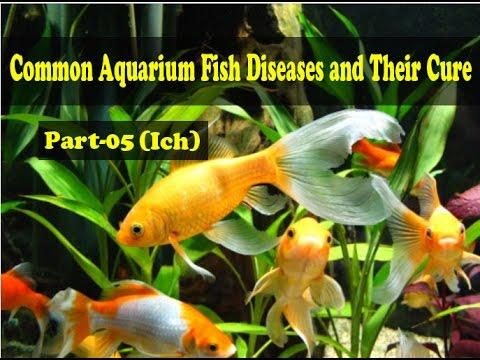Common Aquarium Fish Diseases Part 5 Ich Youtube