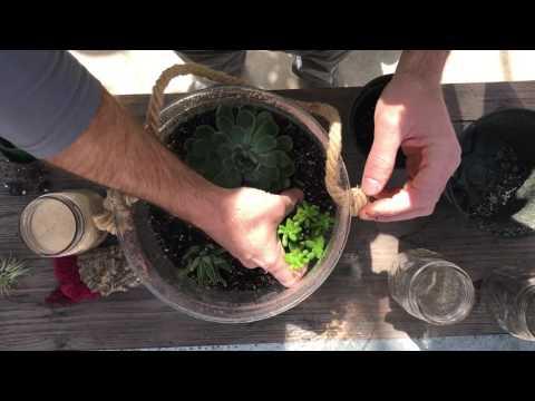 How to Plant a Terrarium