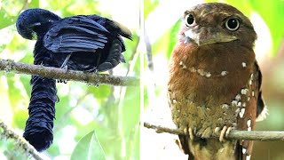 STRANGEST Birds On Earth!