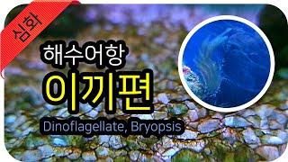 해수어항 - 필연적으로 만나게되는 이끼! 처리방법 2탄…