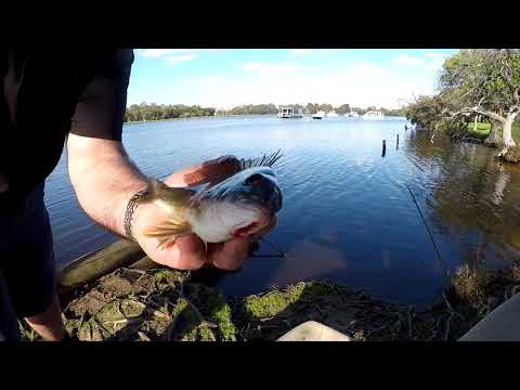 HOOKS BAIT And BEER! - Bream Fishing - ALMOST LOST My Rod! Swan River