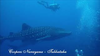 AMAZING! 2 whale Sharks with school of Baracuda in Tubbataha 2018