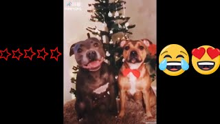 Funny Dogs - A Funny Dog Videos Compilation