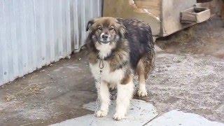 Приют для собак: Друг
