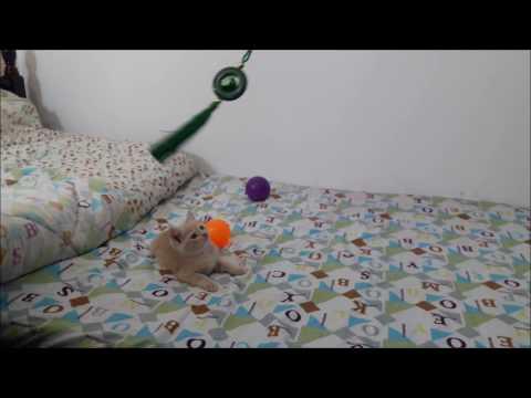 Cute Kitten's Play_Wacky Moments-P3 ღ