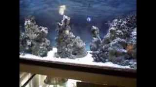 1 Year Update Of 55 Gallon Saltwater Marine Reef Fish Aquarium Diy