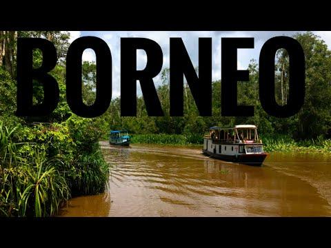 Borneo: Spotting Orangutan In Tanjung Puting National Park, Indonesia.