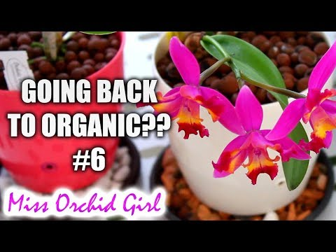 Orchid Q&A #6 | Returning to organic medium, playing music to Orchids & more!
