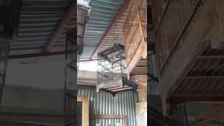 Download Video Suara burung ciblek pines MP3 3GP MP4