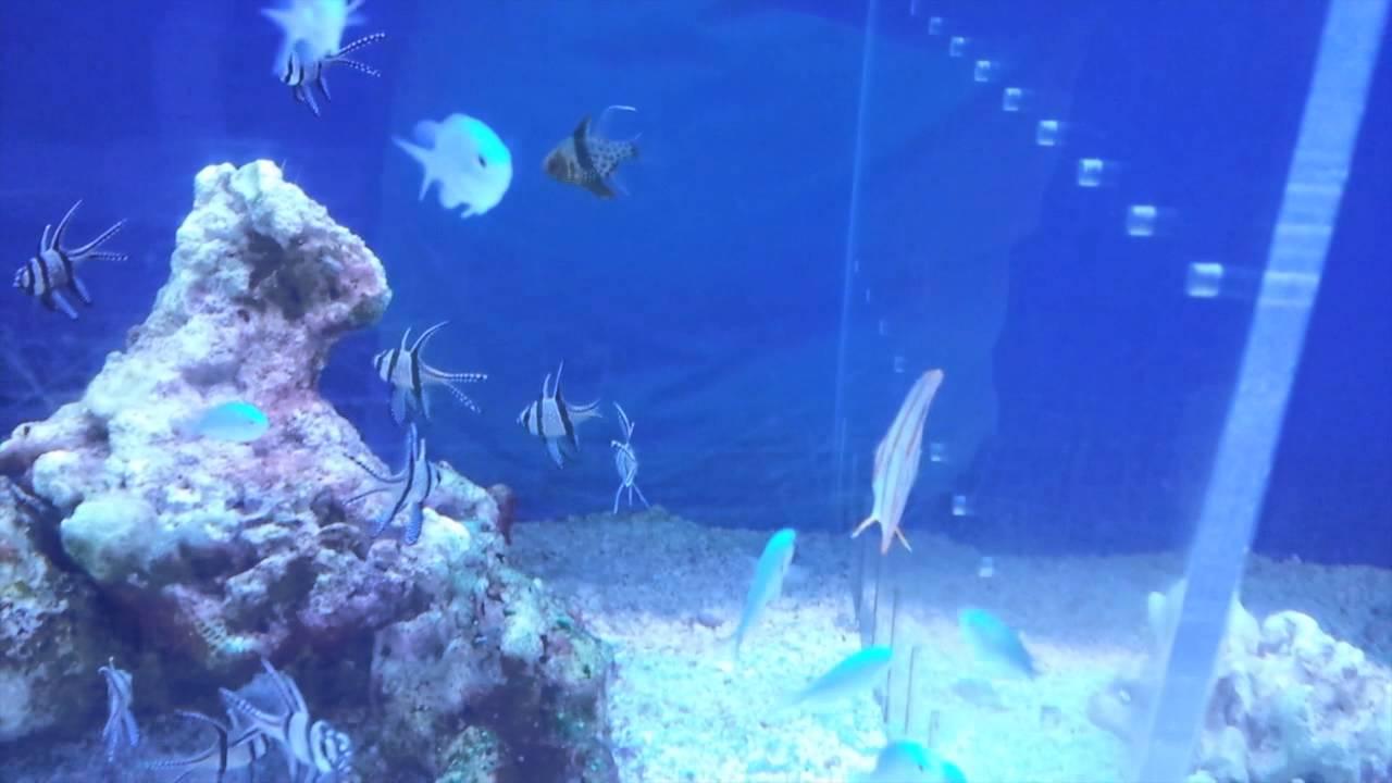 Acuario marino tv 19 la verdad sobre las tiendas de peces for Peces de acuario marino