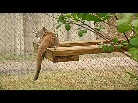 Bobcat Rehab Intensive Care Cam 03-20-2018 14:24:42 - 15:24:42