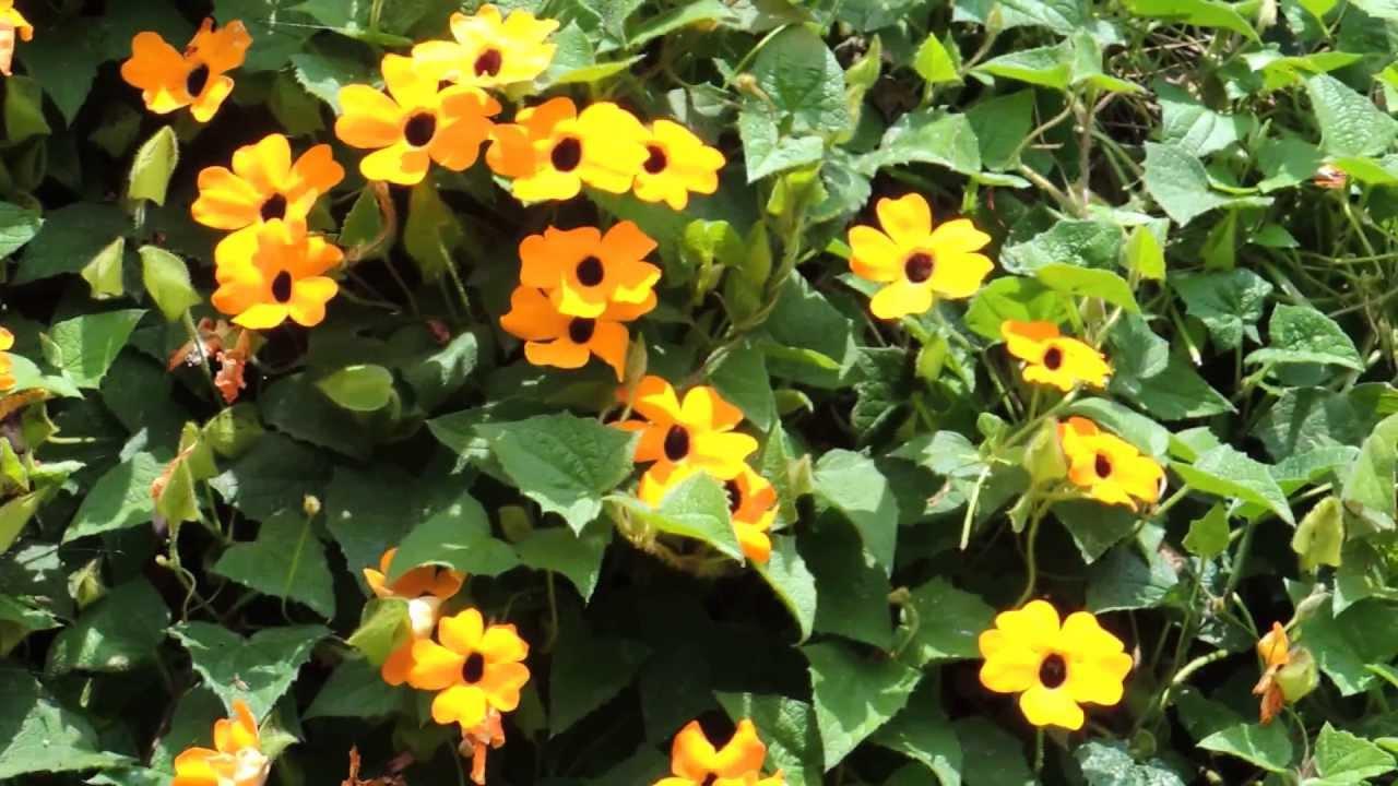 1802 Pequeñas Flores Naranjas En Enredadera Paneo Raw Naturaleza
