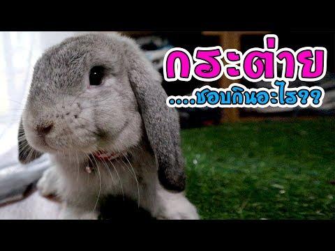 กระต่ายชอบกินอะไรที่สุด bossaพาเพลิน