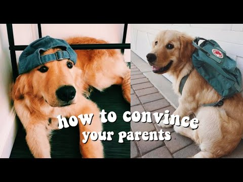 How To Convince Your Parents To Get A Dog!!