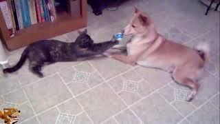 Ржака до слез - приколы про котов