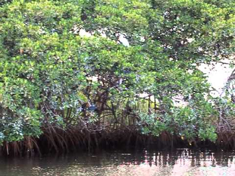 Birds Finding Their Resting Spot at the Saloum Delta National Park