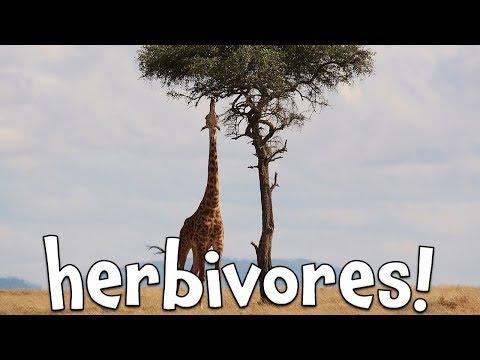 Herbivores!  Learning Herbivore Animals For Kids