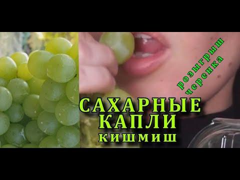 Виноград САХАРНЫЕ КАПЛИ кишмиш , РАТАТУЙ , Sugar Drops Grapes