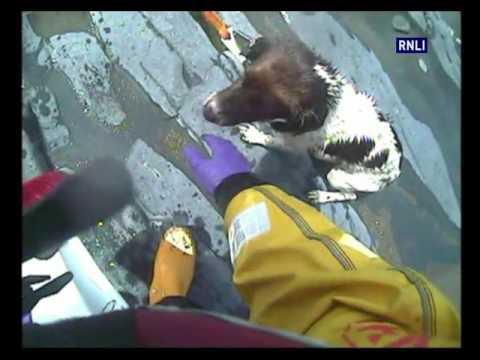 Aberystwyth RNLI rescue fallen dog
