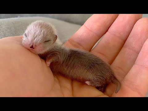 AWW CUTE BABY ANIMALS Videos Compilation Funniest and cutest moments of animals – Soo Cute kiki #11