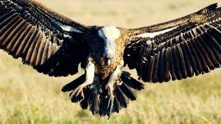 Video Munir Virani: Why I love vultures download MP3, 3GP, MP4, WEBM, AVI, FLV November 2017