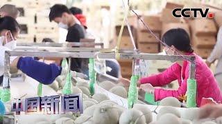 [中国新闻] 创新发展新业态 聚力支持稳就业 | CCTV中文国际
