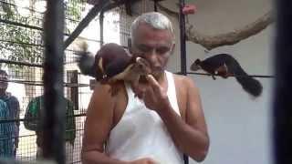 Dr. Prakash  Baba Amte