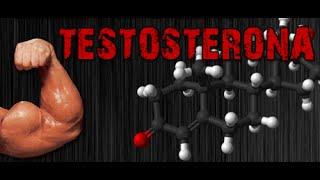 Aumente sua testosterona