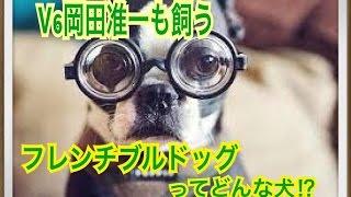 ペットで犬を飼おうと迷っている方へ〜フレンチブルドッグ〜 世の中には...