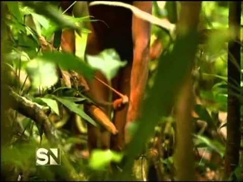 First Contact   Lost Tribe of The Amazon   Sunday Night   Channel Seven