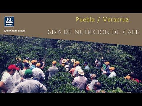 Gira de la Nutrición en Café Yara ☕️ - Puebla y Veracruz