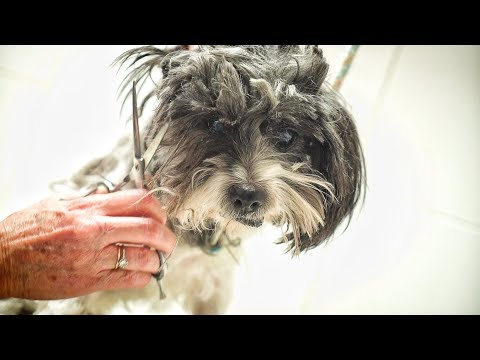 AMAZING! This dog was neglected his entire life... we had to save him !