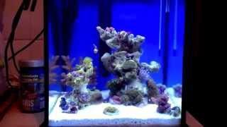 Морской нано аквариум 20 литров Aquades # 1 часть   5 gallon Pico reef aquarium Aquades #1 part(Морской нано аквариум 20 литров Aquades # 1 часть   5 gallon Pico reef aquarium Aquades #1 part Заказать изготовление и обслуживание..., 2012-03-29T22:24:29.000Z)