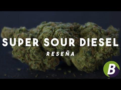 SUPER SOUR DIESEL - Reseña de Variedad de Cannabis
