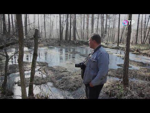В селе Юлово Ульяновской области есть заповедник НЛО. Там пропадают люди и возникают чёрные водоёмы