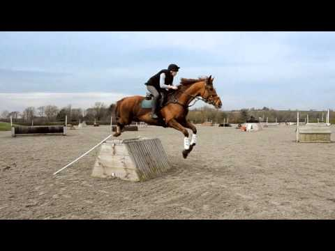 Aston-le-walls XC training ~ Tango
