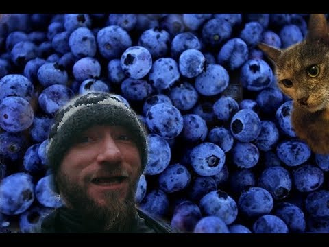 DIY E-Liquid for Beginners:  Blueberry Flavorings