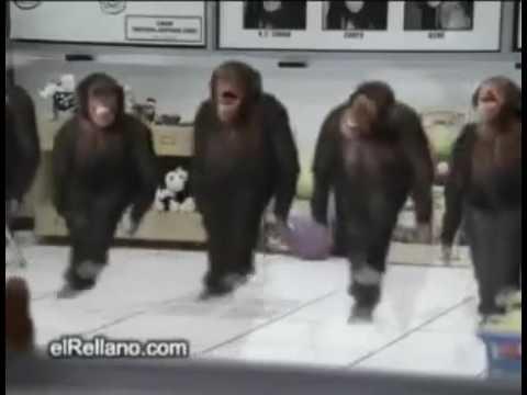 Affen tanz schönes Wochenende