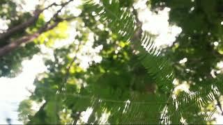 Video Time To Trip Again - Jurang Senggani (Tulungagung)#Cinematography download MP3, 3GP, MP4, WEBM, AVI, FLV Mei 2018