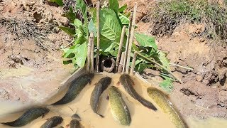 Amazing Making Fish Trap To Catch n Cook - Eat Quietly - Primitive Technology Cooking n Eating