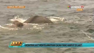 AL Selamatkan Gajah Yang Hanyut di Laut