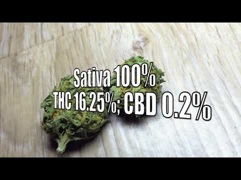 Durban Poison * Weed * Strain * Review