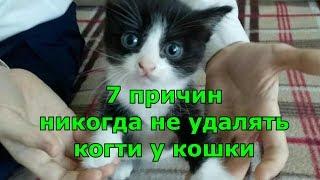 7 причин никогда не удалять когти у кошки.