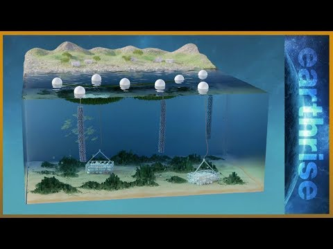 🌏 Farming underwater: 3D solutions for land and sea   Earthrise